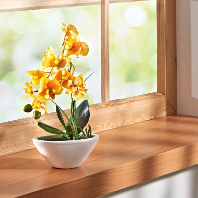 "Orchidej ""Phalaenopsis"""