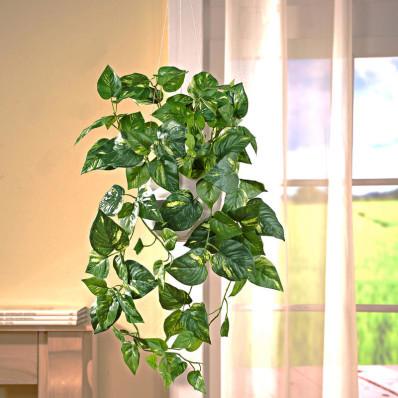 Sztuczna zwisająca roślina Epipremnum