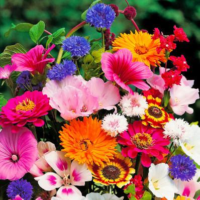 4 maty z nasionami kwiatów