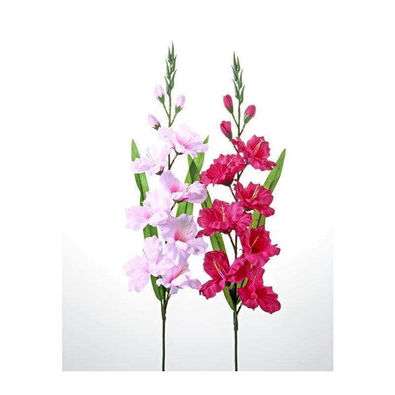 2 gladioly