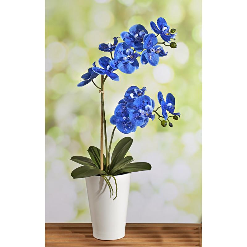 Niebieska orchidea onerror=