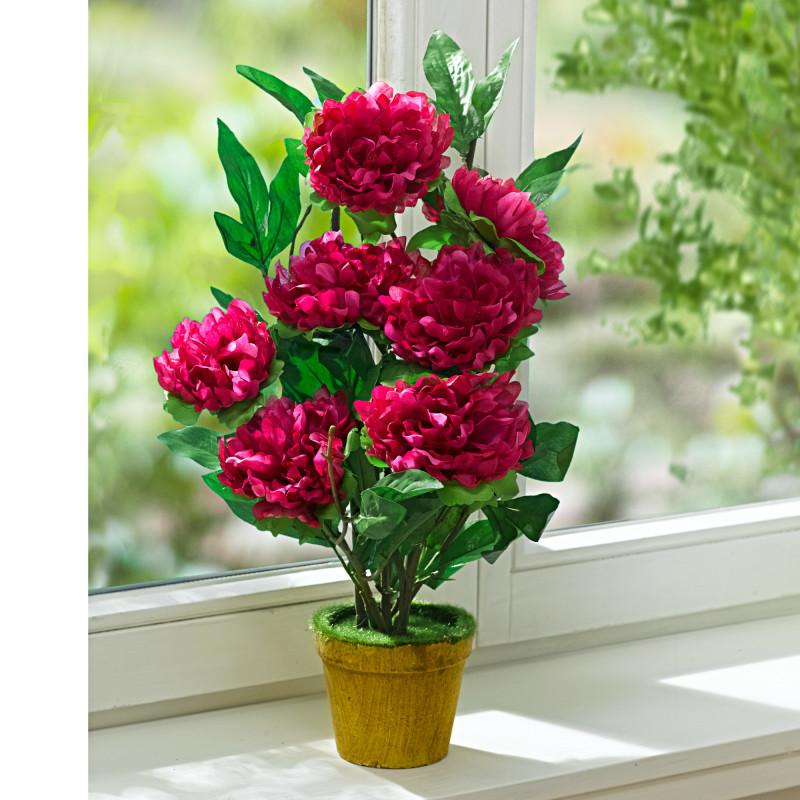Izbová rastlina