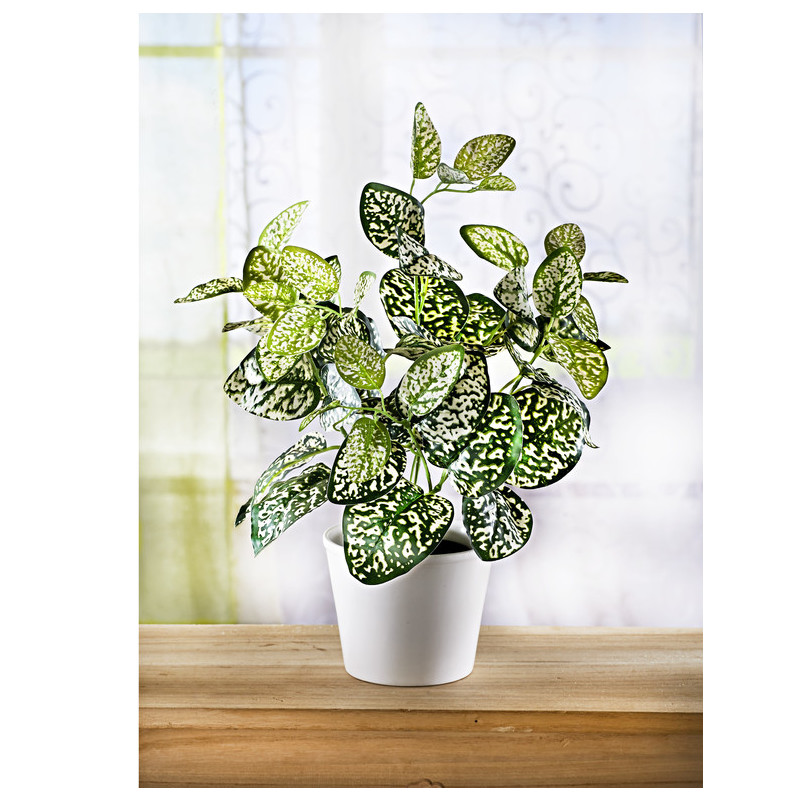 Zelená rastlina v kvetináči