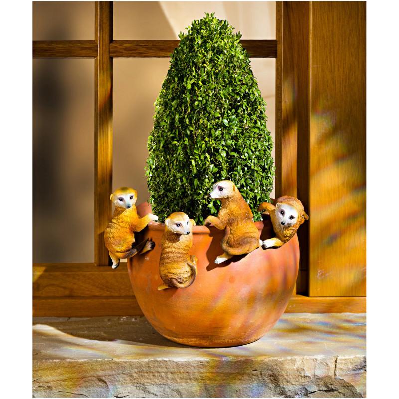 4 surikaty na květináč onerror=