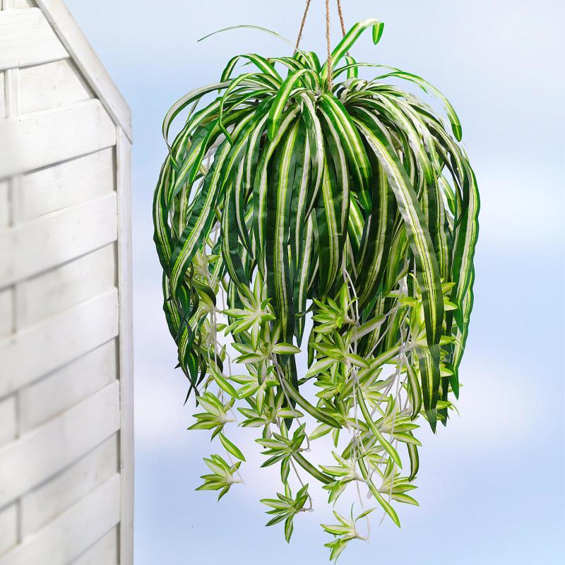 Zelenec (chlorophytum)