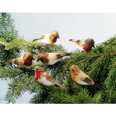 6 vtáčikov