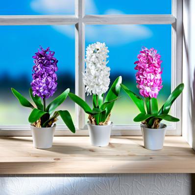 Hyacint v květináči, bílá