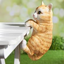 Šplhající kočička