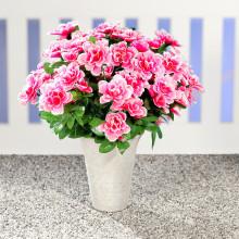 Kytice azalek, růžová-bílá