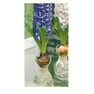 Váza na hyacinty - 3ks